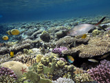 Photo of a tropical Fish on a coral reef. - 209655675