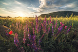 Golden Field and Flowers Illuminated by Setting Sun with Braunsberg Hill and Cloudy Sky in the Background - 209656280