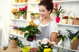In the flower shop. Delighted professional woman working in the flower shop while being a professional florist - 209657658