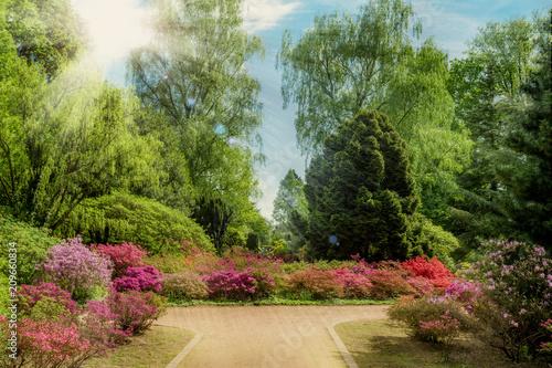 Fotobehang Azalea Beautiful garden in spring