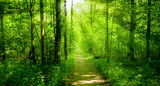 beautiful green forest.  forest with sunshine © EwaStudio