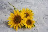 Sunflowers on gray vintage background.