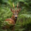 Leinwanddruck Bild - portrait of deer in the woods