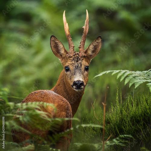 Leinwanddruck Bild portrait of deer in the woods