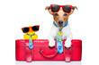 Quadro dog on vacation