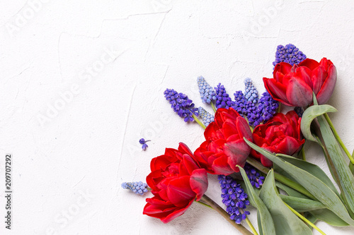 Red tulips and blue muscaries flowers  on  white textured  background.