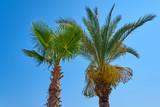 Palm trees against blue sky  - 209711479