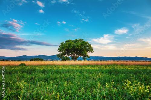 Aluminium Lente Big green tree in a field