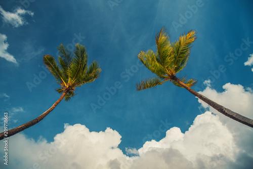 Palm trees against blue sky on tropical island beach