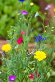 Bunte Wildblumen