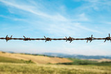 Fence with barbed wire, fields and blue sky on background - 209725240