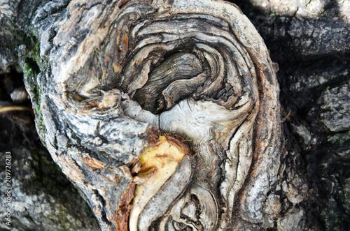 Stara drewniana tekstura. Kora drzewa.