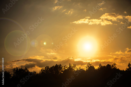 Foto Murales sun over forest at summer