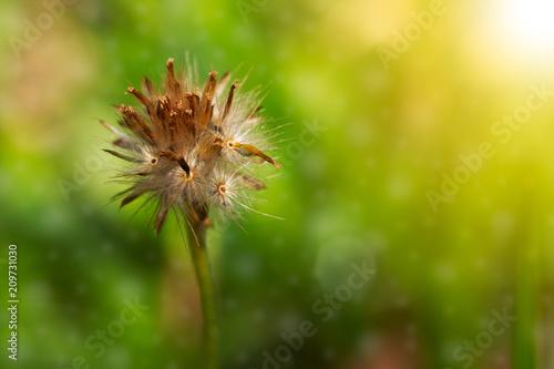 Grass flower bokeh green background - 209731030