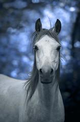 Cheval blanc sur fond bleu