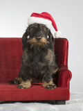 Funny wiener dog picture. The wiener dog is sitting on a red sofa and is wearing a Christmas hat. - 209750672