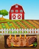 A Happy Rabbit Family at Farm - 209754232