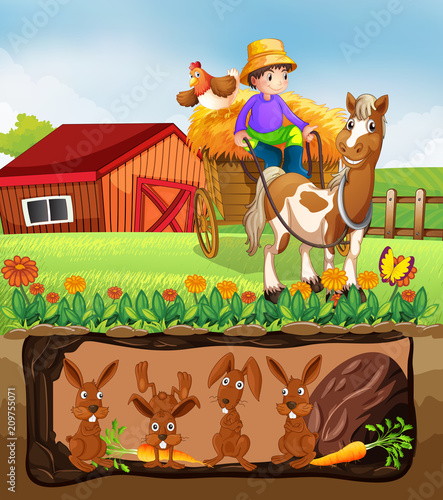 Rabbit Living in Underground Farm