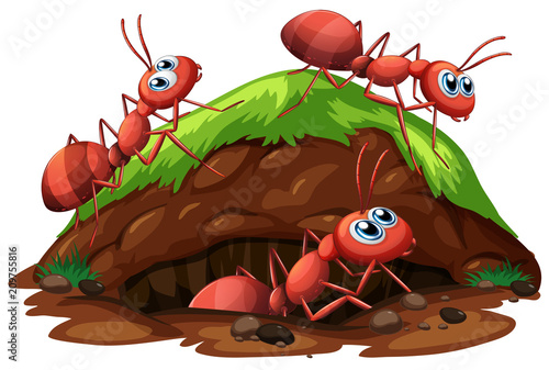 Fotobehang Kids Worker Ants on White Background