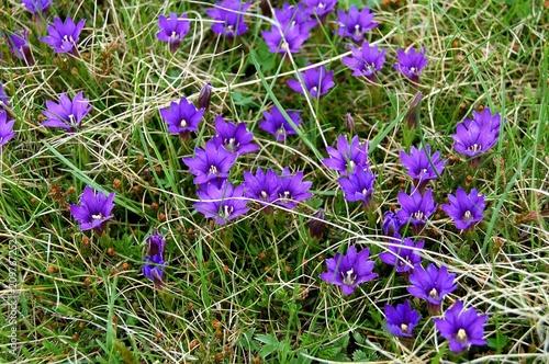 Aluminium Lavendel Bulgarie