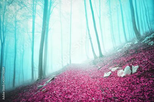 Plexiglas Herfst Fantasy colored autumn season foggy forest scene with path.