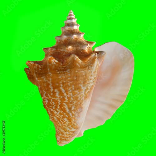 Leinwandbild Motiv Conch Shell on Chroma Key Green Background 1