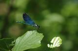 Dragonfly on a green leaf - 209785000