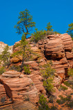 Panoramic View of Zion National Park, Utah. Zion National Park is a southwest Utah nature preserve distinguished by Zion Canyon's steep red cliffs and unique geological formations.  - 209785823