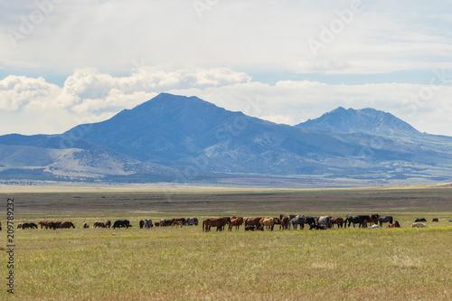 Foto Murales Wild Horse Herd in utah