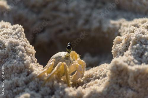Foto Murales Caranguejo passeando nas areias quentes do verão