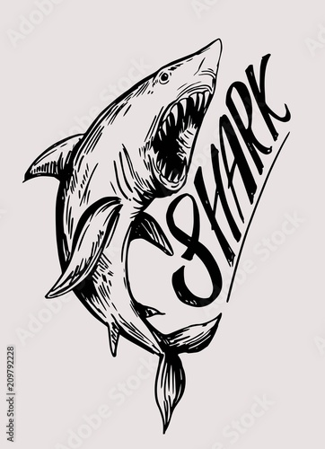 Fototapeta Shark sketch