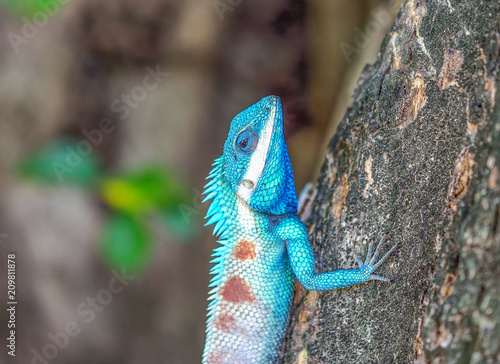 Aluminium Kameleon Colorful chameleon on the trees
