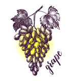 Ink hand drawn Bunch of ripe grapes. Vector illustration with brush calligraphy style lettering. Elements for design labels, packaging, cards. - 209835457