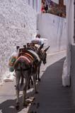 Lindos, Grecja - ośla taksówka - 209846640