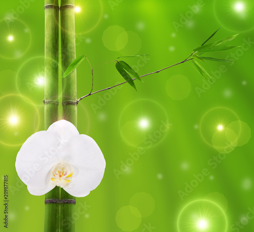 bamboo branches with white orchid bloom - 209877815