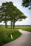 Green trees along winding road - 209916483