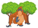 orangutan, monkey, primacy, animal, zoo, nature, illustration, orange, trees - 209921021