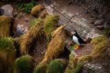Aberdeenshire Puffins cliffs nature