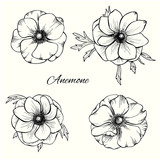 Anemone vector set in hand drawn style. Floral design set - 209931861