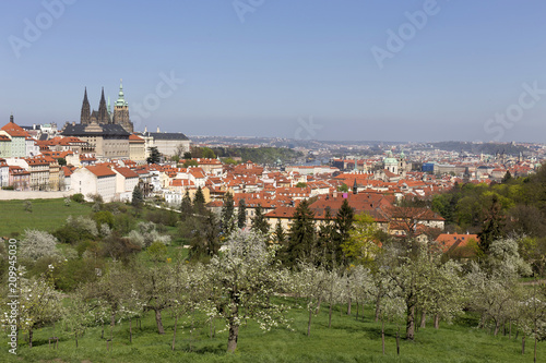 View on the spring Prague City with the green Nature and flowering Trees, Czech Republic - 209945030