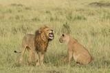 Lion and lioness at Masaimara