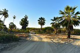 morning on beach roads in tropical Baja, Mexico - 209952281