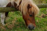 The Pony - 209952403