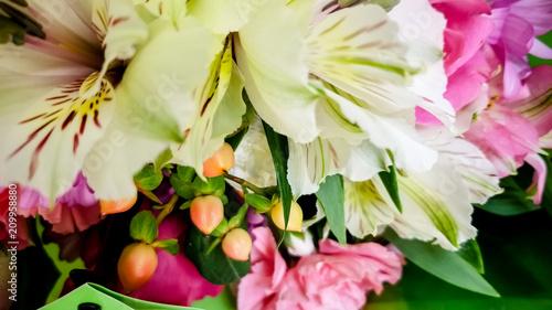 Fotobehang Canada flower variety