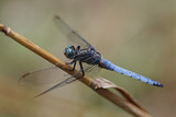 dragonfly in nature - 209972489