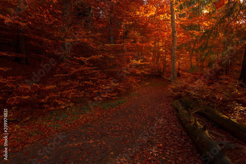 Canvas Rood paars Inside fairy tale romantic autumn forest