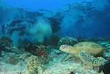 Green Turtle on coral reef  - 209976681