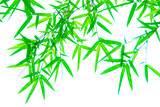 Tree branches and leaves are green on a white background.