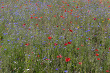 colorful natural wildflower meadow