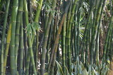 Bambous, océan indien © Didier San Martin